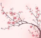 Pintura oriental del estilo, flor de cereza en resorte Imagen de archivo