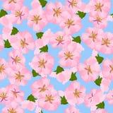 Pintura oriental del estilo, flor de cereza en resorte Foto de archivo
