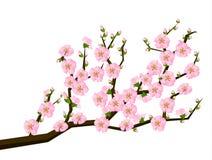 Pintura oriental del estilo, flor de cereza en resorte Imagenes de archivo