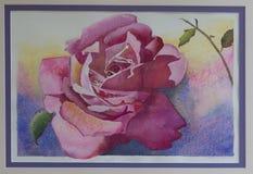 Pintura original da aquarela - única Rosa fotografia de stock royalty free
