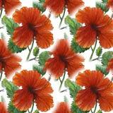 Pintura original da aquarela do teste padrão vermelho do hibiscus Fotos de Stock Royalty Free