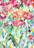 Pintura original da aquarela do verão, mola Imagem de Stock Royalty Free