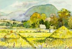 Pintura original da paisagem da aquarela colorida do campo de milho Imagem de Stock Royalty Free