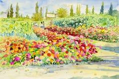 Pintura original da paisagem da aquarela colorida do jardim Imagens de Stock