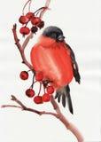 Bullfinch Imagenes de archivo