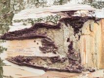 Pintura original en tronco de árbol Fotos de archivo libres de regalías