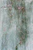 Pintura rachada da casca Fotos de Stock