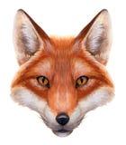 Retrato del Fox de la acuarela ilustración del vector