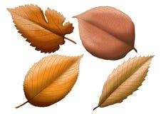 Pintura seca de Brown da folha no fundo branco ilustração stock