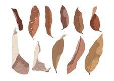 Pintura seca de la hoja de Brown del color en el fondo blanco ilustración del vector