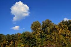 Pinturas da história do outono nos bancos do Danube River 1 imagens de stock