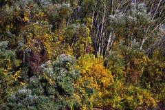 Pinturas da história do outono nos bancos do Danube River 2 fotos de stock royalty free