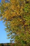 Pinturas da história do outono nos bancos do Danube River 3 foto de stock