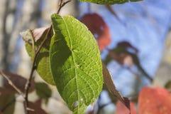 Pinturas multicoloras del período del otoño Imagen de archivo libre de regalías