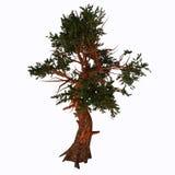Pinus aristata drzewo ilustracja wektor