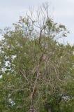 Pond pine Tree stock photos