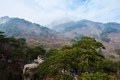 Pinus taiwanensis and peaks Royalty Free Stock Photo