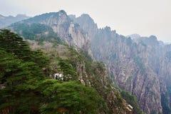 The Pinus taiwanensis of West sea valley Stock Photos