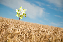 Pinwheel in a field. Pinwheel in a golden wheat field Royalty Free Stock Images