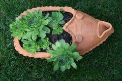 Pinwheel Royalty Free Stock Photo