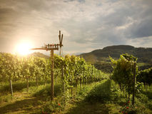 Pinwheel Klapotetz in the vineyard, Southern Styria Austria Stock Photography