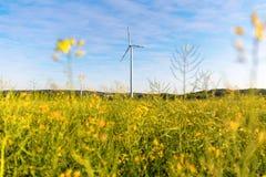 Pinwheels na gwałta polu z niebieskim niebem zdjęcie stock