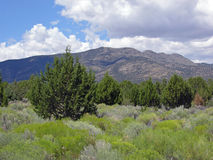 Pinyon juniper and sage biome in east- central Nevada. Image taken in the central and eastern part of Nevada. Pinyon juniper and low growing sage are Royalty Free Stock Image