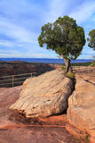 Rośliny & drzewo   Zdjęcia Royalty Free