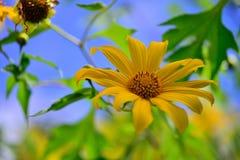Pinzas de Bua de las flores Imagen de archivo libre de regalías