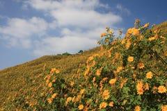 Pinzas de Bua, flor fotografía de archivo libre de regalías