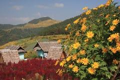 Pinzas de Bua, flor imagenes de archivo