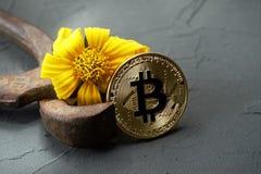 Pinze arrugginite di Bitcoin e fiore giallo appassiti fotografie stock