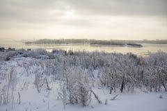 Piołun pod śniegiem na banku Ob rzeka w Novosibirsk o Obraz Royalty Free