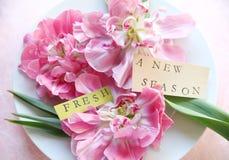 Pioen bloeiende tulpen op plaat Stock Fotografie