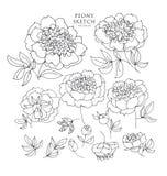 Pioen bloemenschets De vectorillustratie van de Bloem van de lente Royalty-vrije Stock Afbeelding