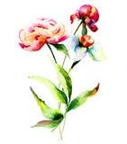 Pioen en Narcissenbloemen Stock Foto