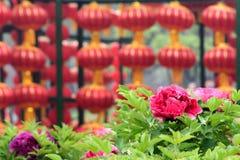 Pioen en rode lantaarns stock afbeeldingen
