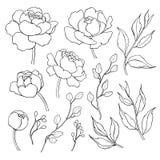 Pioenbloem en van de bladerenlijn tekening Vectorhand getrokken overzicht Stock Foto's