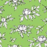 Pioenbloem, knoppen, bladeren zwart-wit naadloos patroon Hand getrokken overzichts bloemenillustratie Rebecca 36 stock illustratie