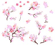 Pioenbloem met sakurabloesem De Japanse bloesem van de bloemkers royalty-vrije illustratie
