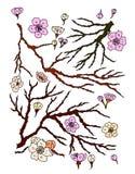 Pioenbloem met sakurabloesem De Japanse bloesem van de bloemkers vector illustratie