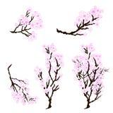 Pioenbloem met sakurabloesem De Japanse bloesem van de bloemkers stock illustratie