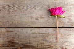Pioenbloem op een houten lijst stock foto