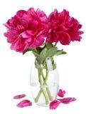 Pioenbloemen in geïsoleerde vaas Royalty-vrije Stock Foto's