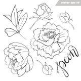 Pioenbloemen, knoppen, bladerenvector geschetste reeks vector illustratie