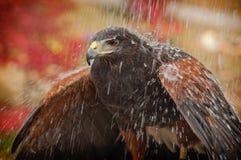 Pioggia Immagine Stock