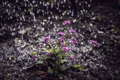 Pioggia immagini stock