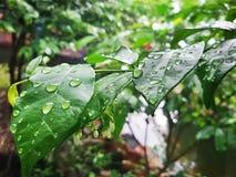 Pioggia Fotografia Stock Libera da Diritti
