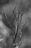 Pioggia fotografie stock libere da diritti