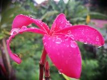 Pioggia baciata Fotografia Stock Libera da Diritti